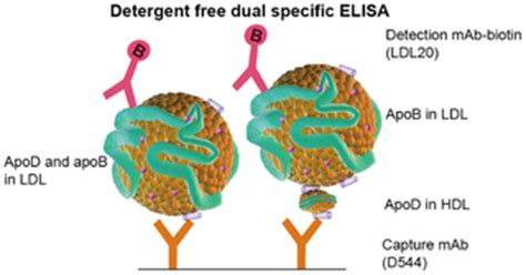 Lipids in health and disease essay